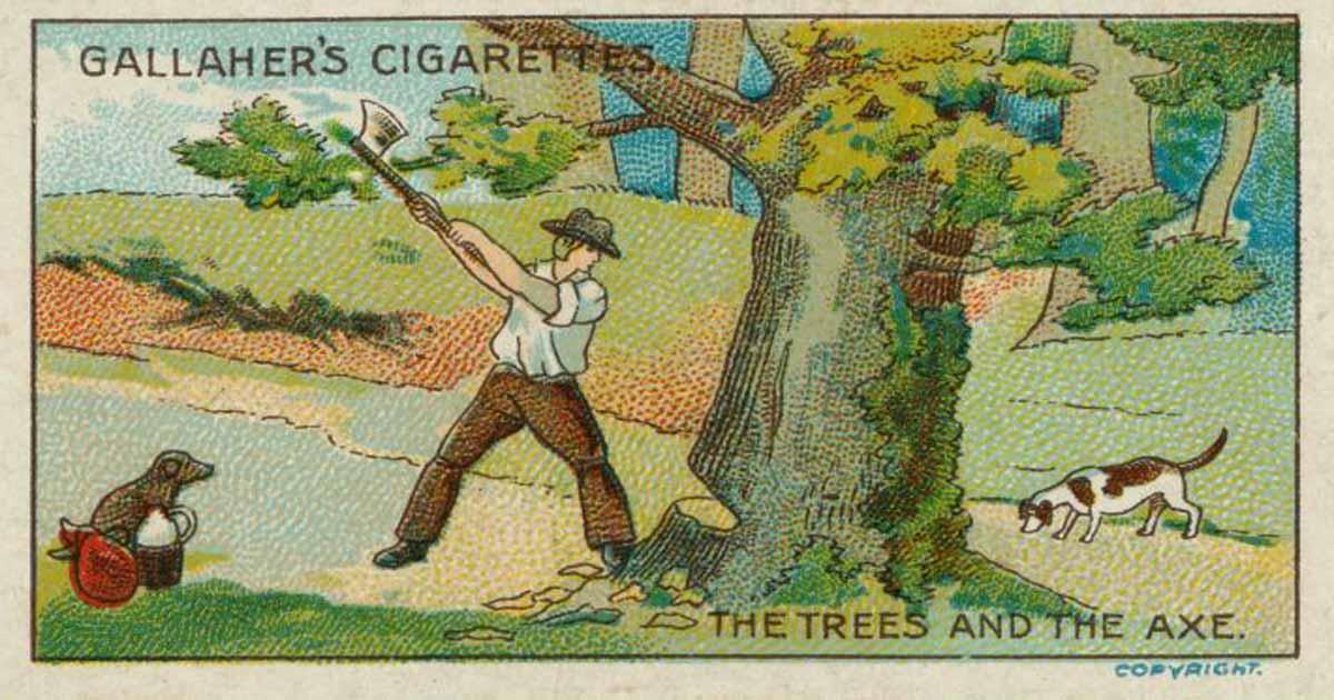 นิทานภาษาอังกฤษ ต้นไม้กับขวาน