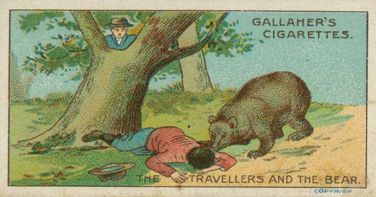 นิทานภาษาอังกฤษ หมีกับนักเดินทาง